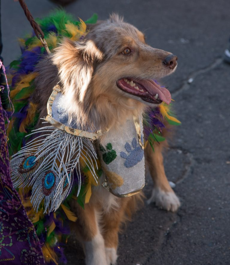 Barkus, Mardi Gras 2015
